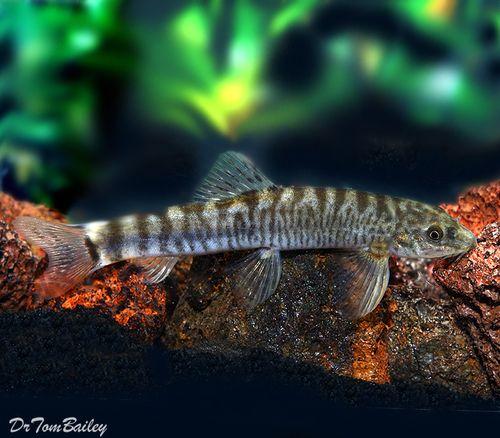 Aquariumfish Net Aquarium Fish Tropical Fish Goldfish For Sale
