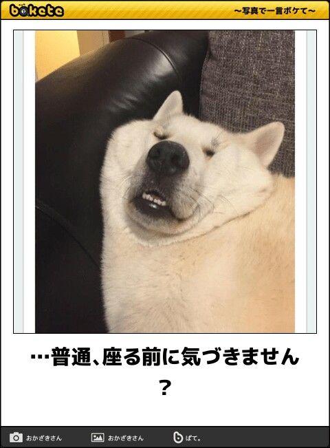 子供の詩 おしゃれまとめの人気アイデア Pinterest Kaori Hirose 動物おもしろ画像 爆笑画像 赤ちゃんおもしろ画像