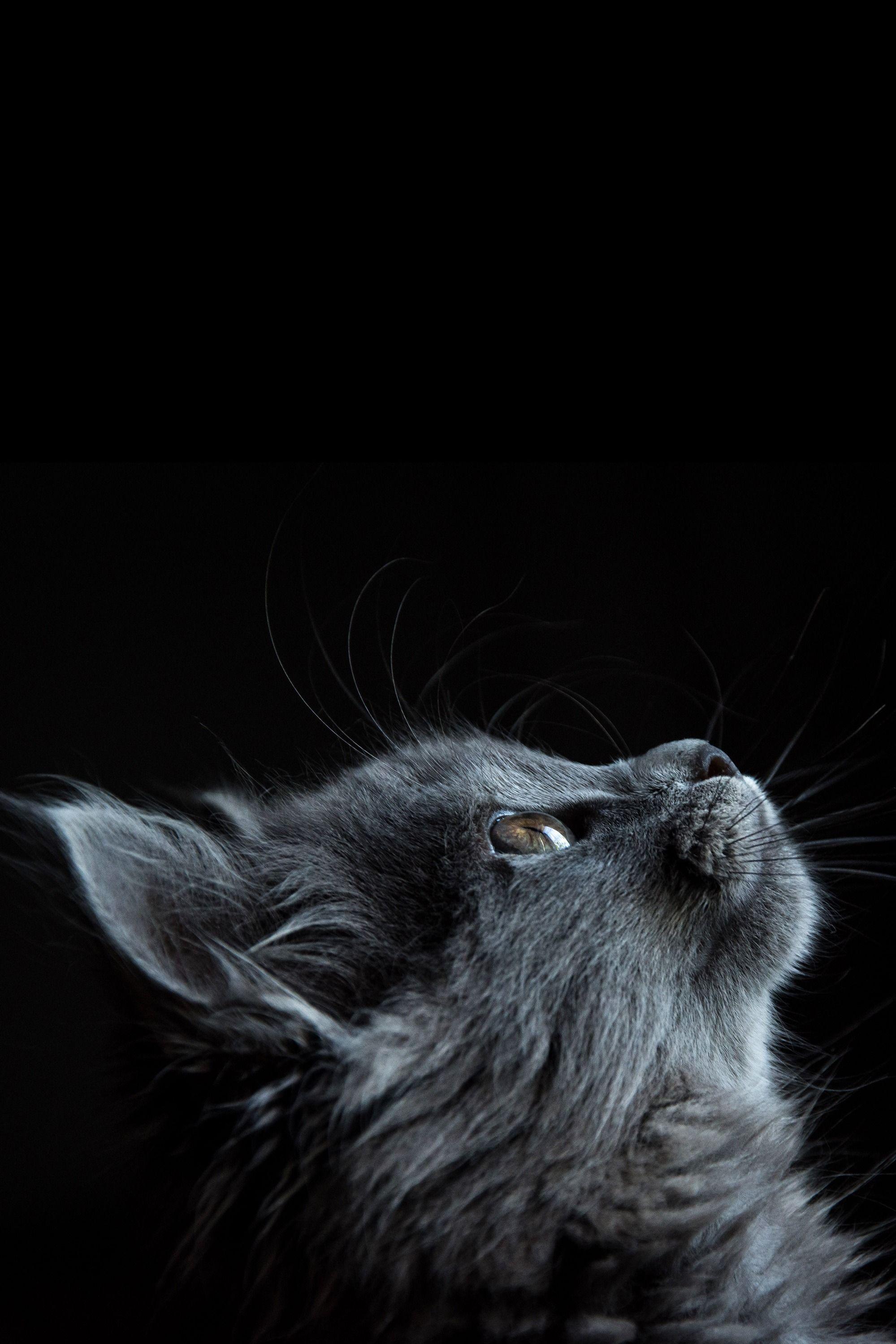 Cat Animal Black Dark Photooftheday Beautiful Wonderful