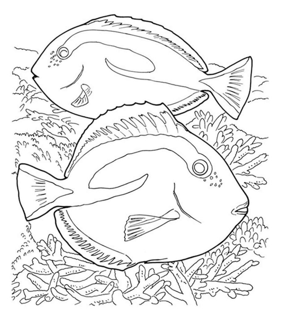 Top 10 Coral Coloring Pages For Toddler In 2020