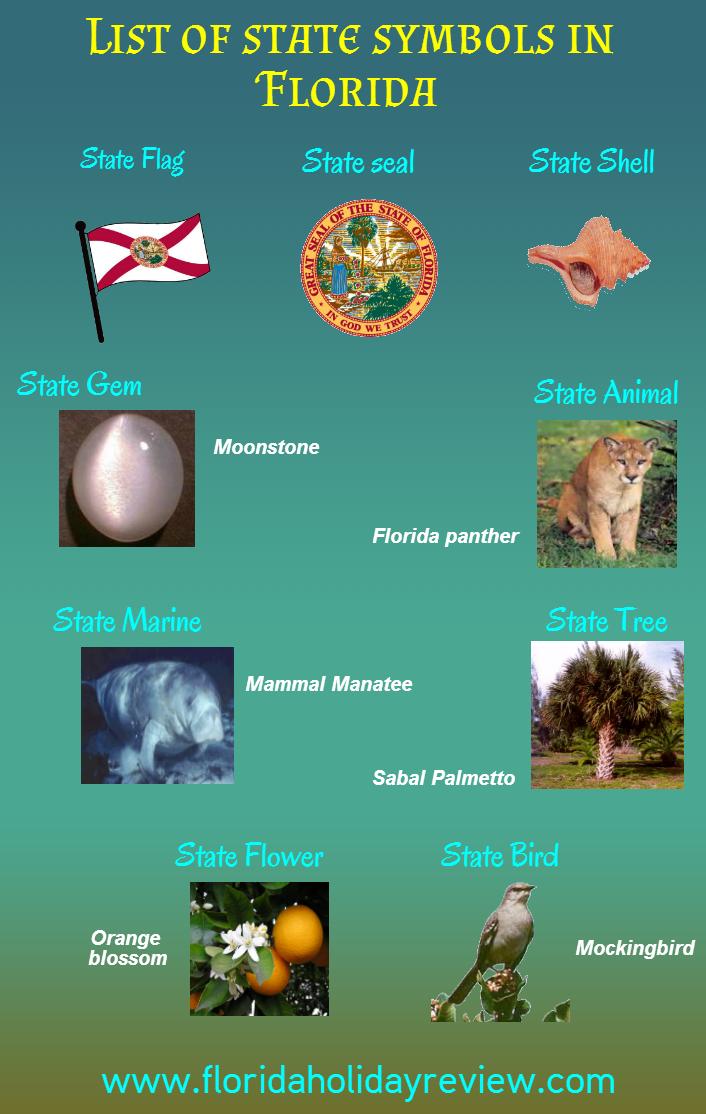 List of symbols in florida florida information pinterest symbols list of symbols in florida buycottarizona Gallery