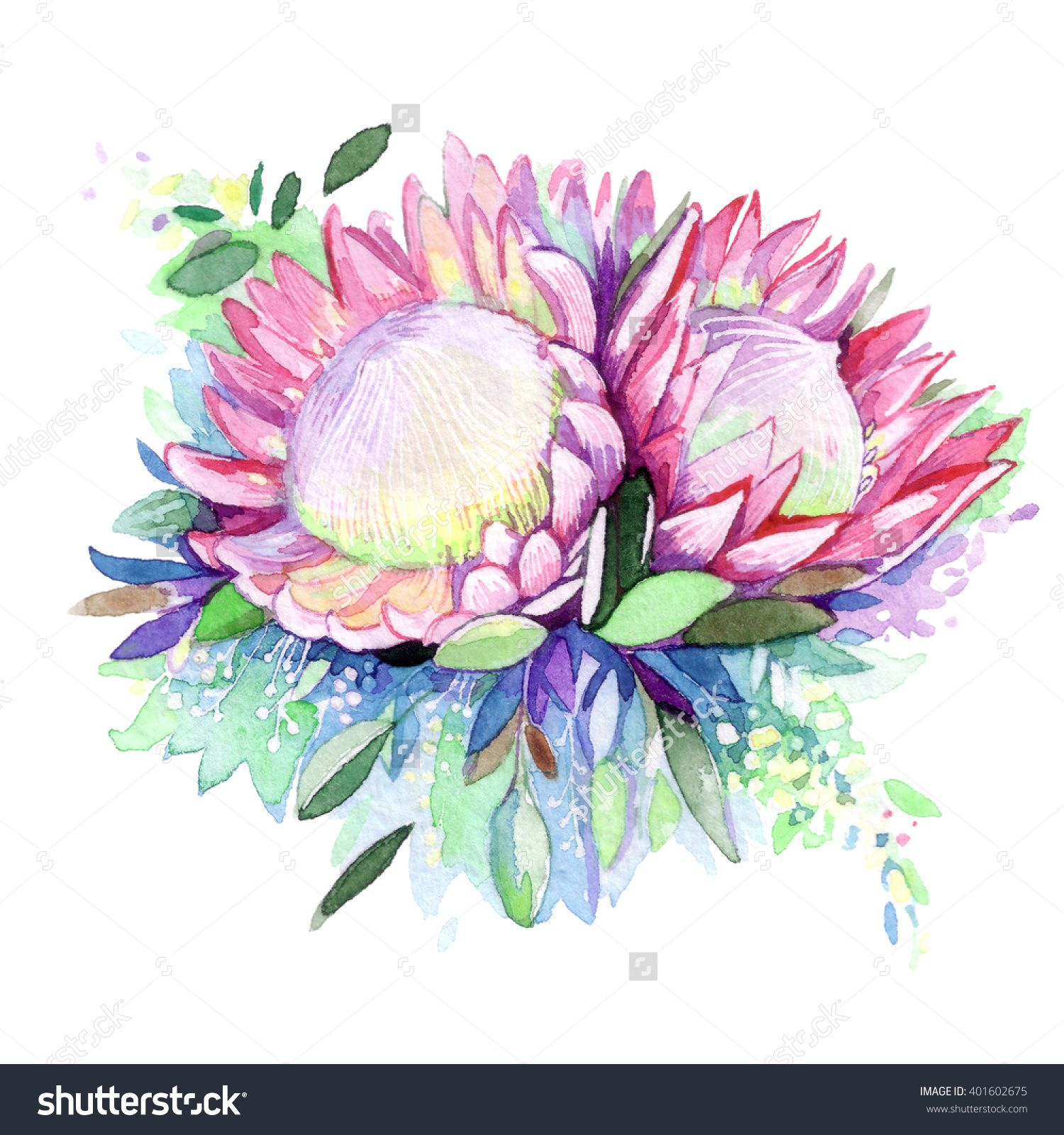 High Quality Watercolor Painted Protea Bouquet Hand Painted Purple Leaves Pink Flowers Protea Flower Her Watercolor Illustration Protea Flower Illustration