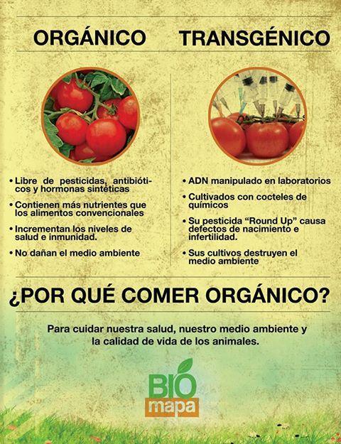 Organico Vs Transgenico Alimento Transgenico Alimentos Organicos Aditivos Alimentarios