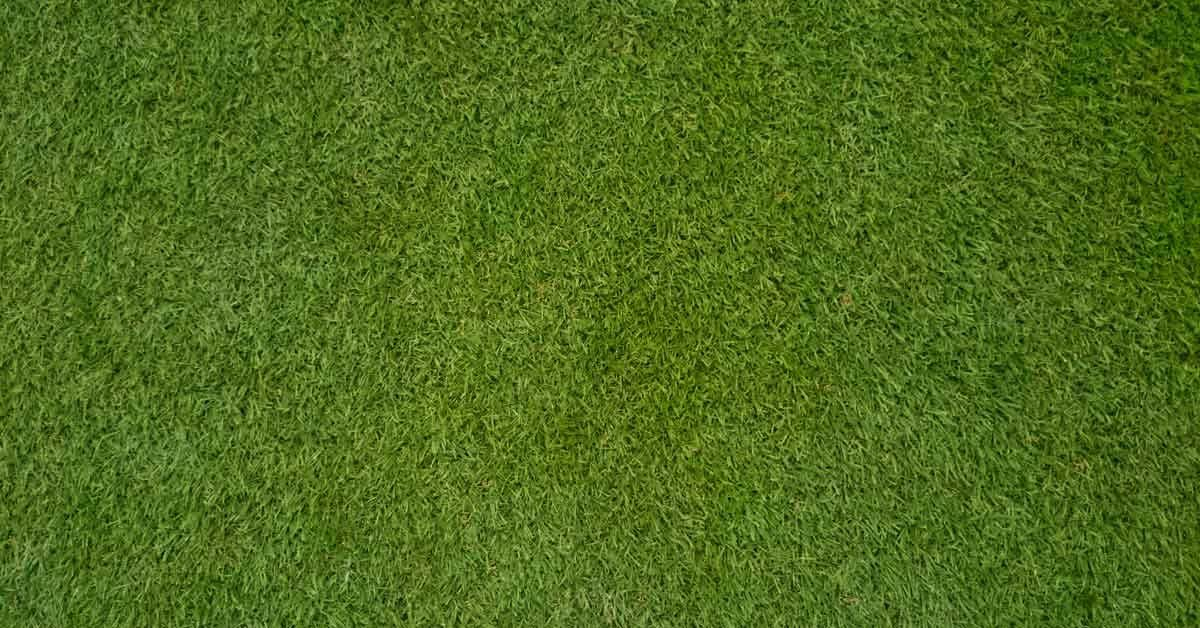 How to Overseed or Reseed Your Lawn Grass textures