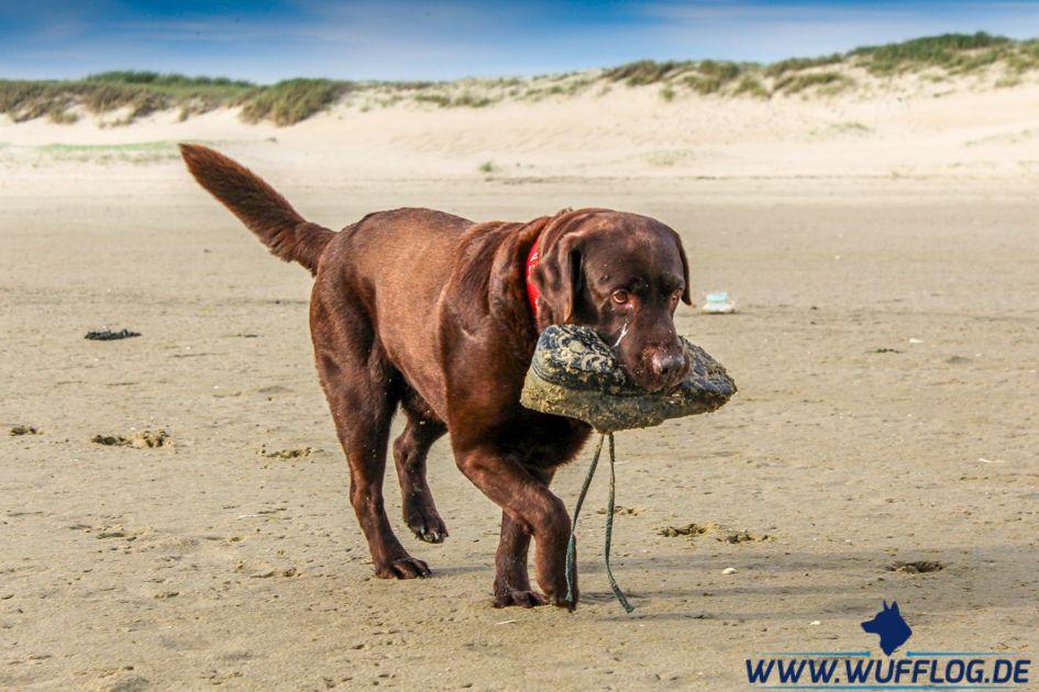 Texel Auf 4 Pfoten Anzeige Hollandische Inseln Urlaub Mit Hund Hunde