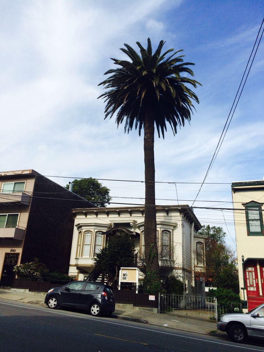 Palm in San Francisco