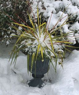 10 Plants For Year Round Containers These Survivors Can Stay In Pots Years Lending Consistency To Your Designs