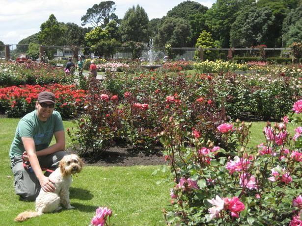 Botanic Gardens Wellington New Zealand Botanical Gardens Pet Friendly Holidays New Zealand