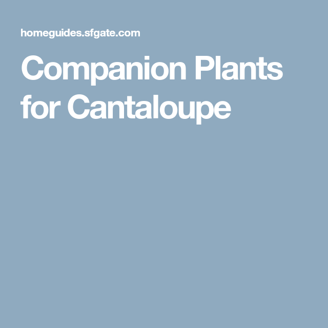Companion Plants For Cantaloupe Companion Planting 400 x 300