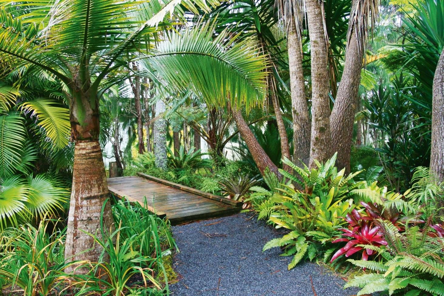 8 top plants to add tropical texture to a NZ garden ...