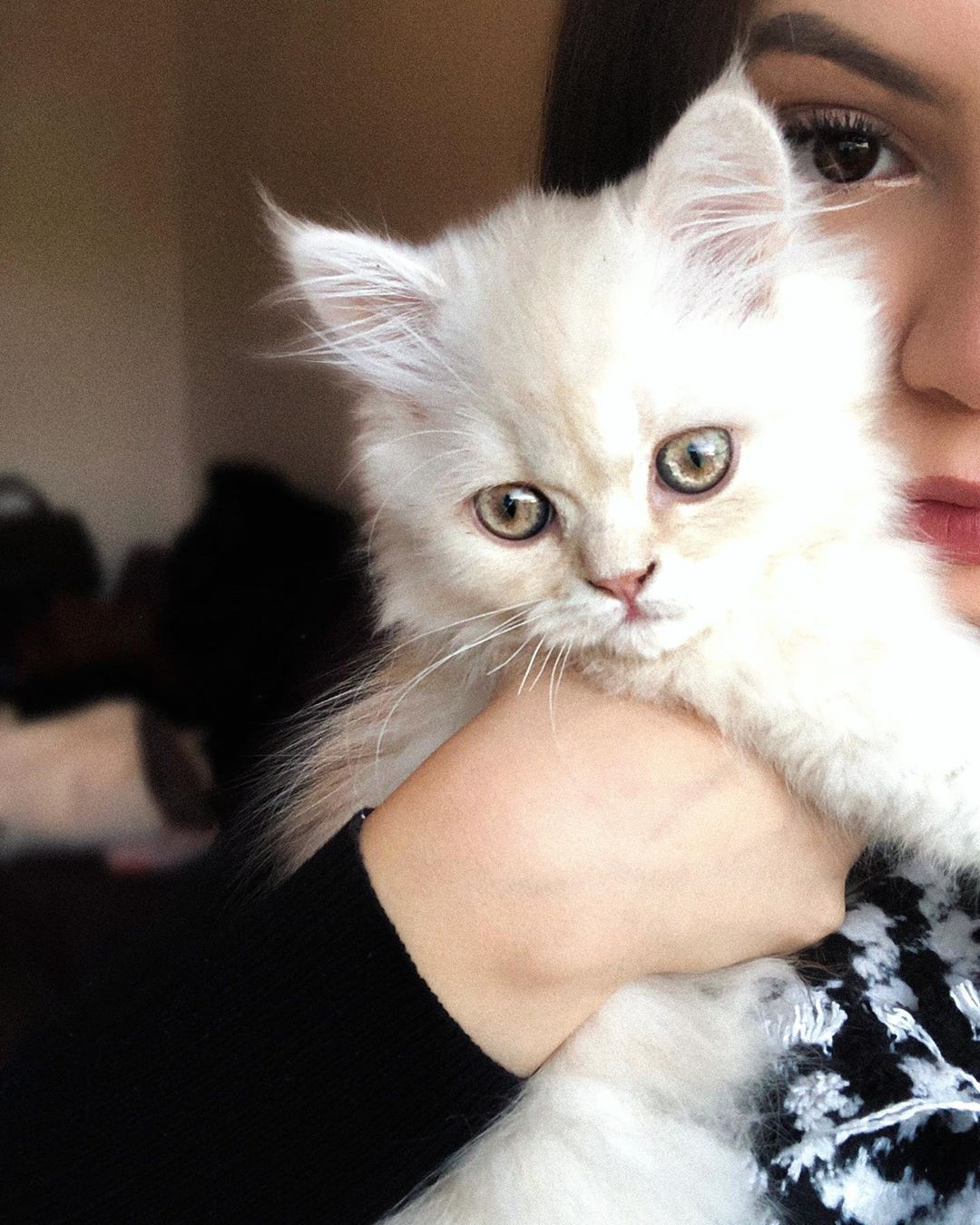 mommy and me  . . . . . . . . - mommy and me 😻🤍 . . . . . . . . #persiancats #catsofinstagram #catmom #whitecat #kitty #kittycat #germany #eyes #cateyes #persiankitten #persiankitty #babycat #follow4follow #like4like #catmeme #catphotography #colorful     Informations About mommy and me  . . . . . . . .                  Pin     You can easily use my profile to examine different pin types. mommy and me  . . . . . . . .                  pins are as aesthetic and useful as you can use them for de