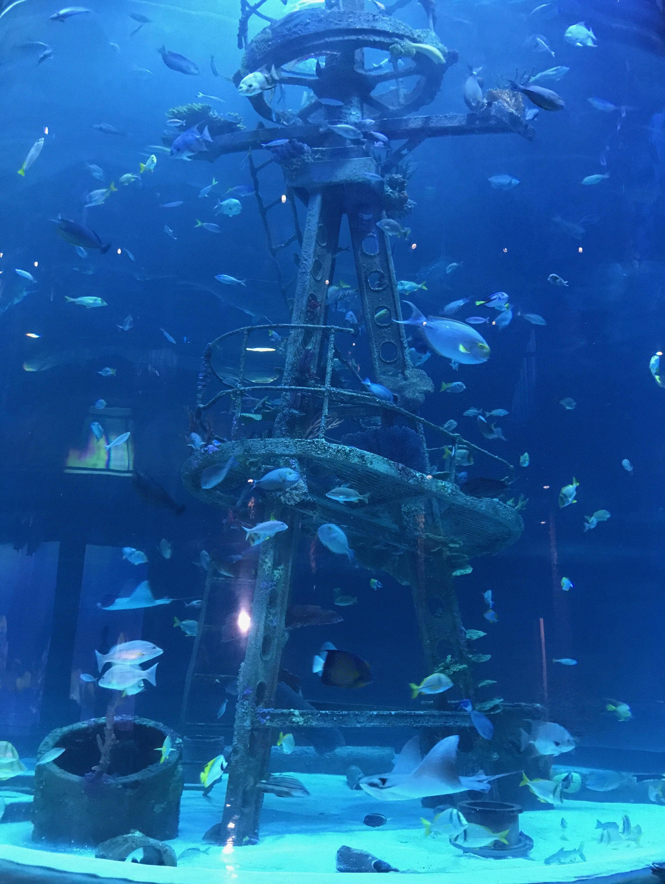 Springfield Mo The Largest Fish And Wildlife Exhibit In The World Opens Up This Week In Sp Branson Missouri Vacation Branson Vacation Springfield Missouri