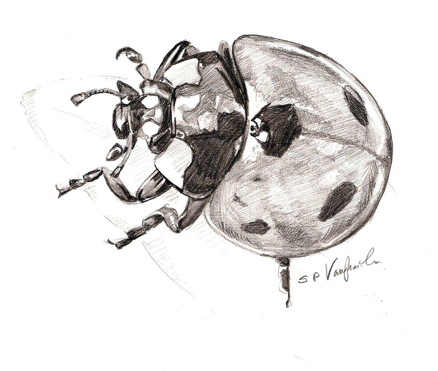 Drawing From Experience... Ladybird | Dessin | Ladybug Bird Drawings Drawings