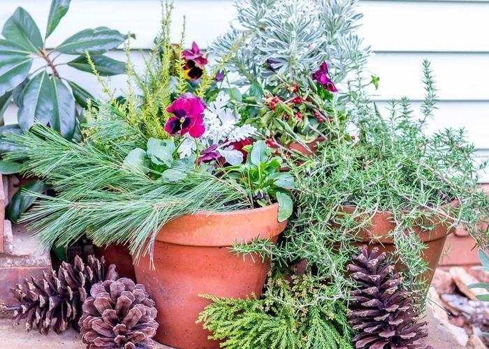 Elegant How To Make Winter Garden Planters | The Garden Glove