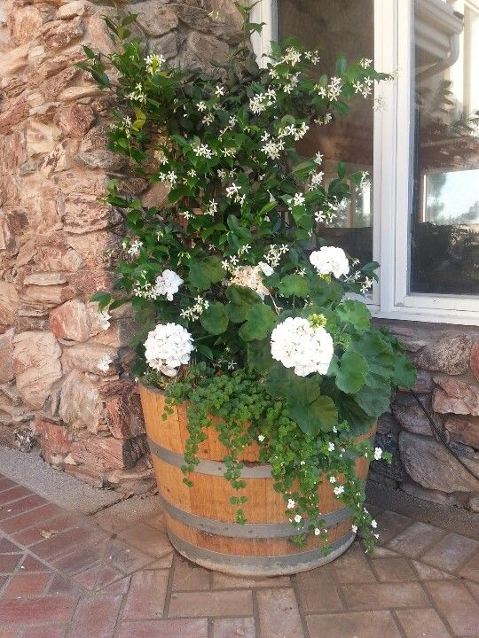 Half wine barrel with natural wood stain made into a planter half wine barrel with natural wood stain made into a planter garden pinterest natural wood stains barrels and planters workwithnaturefo