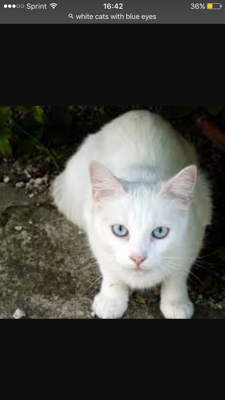 Cloudheart Breezeclaw S Sister And The Mudclan Medicine Cat Cat With Blue Eyes Warrior Cat Names White Cats