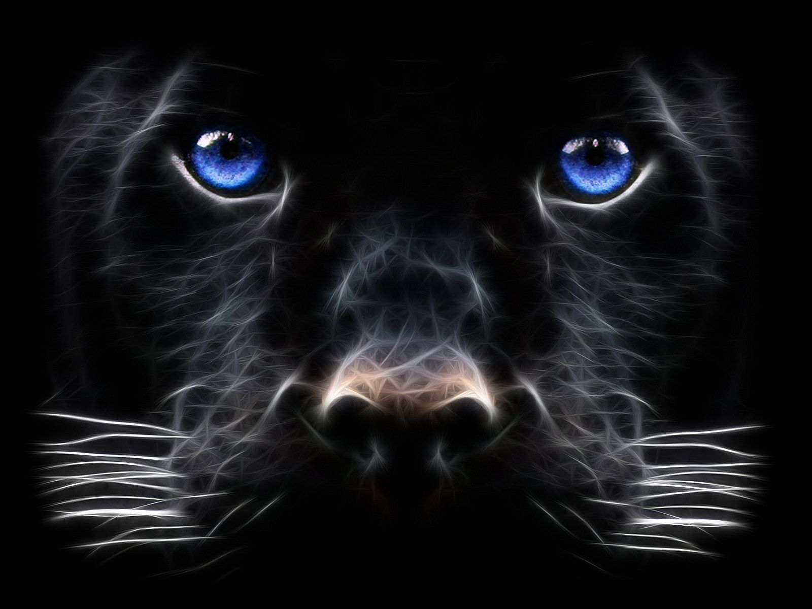 Pin By Tina Parker On Animal Kingdom Panther Pictures Cat With Blue Eyes Beast Wallpaper
