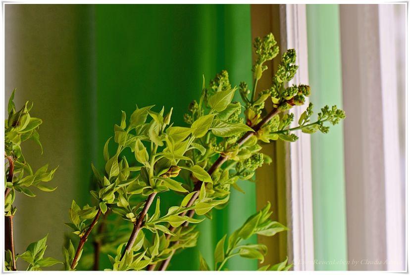 Verde - ispirazioni di primavera.... Flieder  #EssenReisenLeben #Frühling #Primavera #Flieder  https://www.facebook.com/EssenReisenLeben