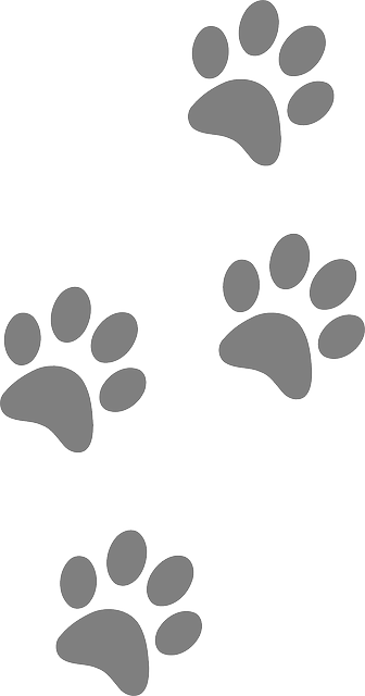 Free Image On Pixabay Footprints Animal Dog Paw Cat Hondenpoot Tatoeages Illustraties Tatoeage Kat Free icons of paw in various ui design styles for web, mobile, and graphic design projects. pinterest