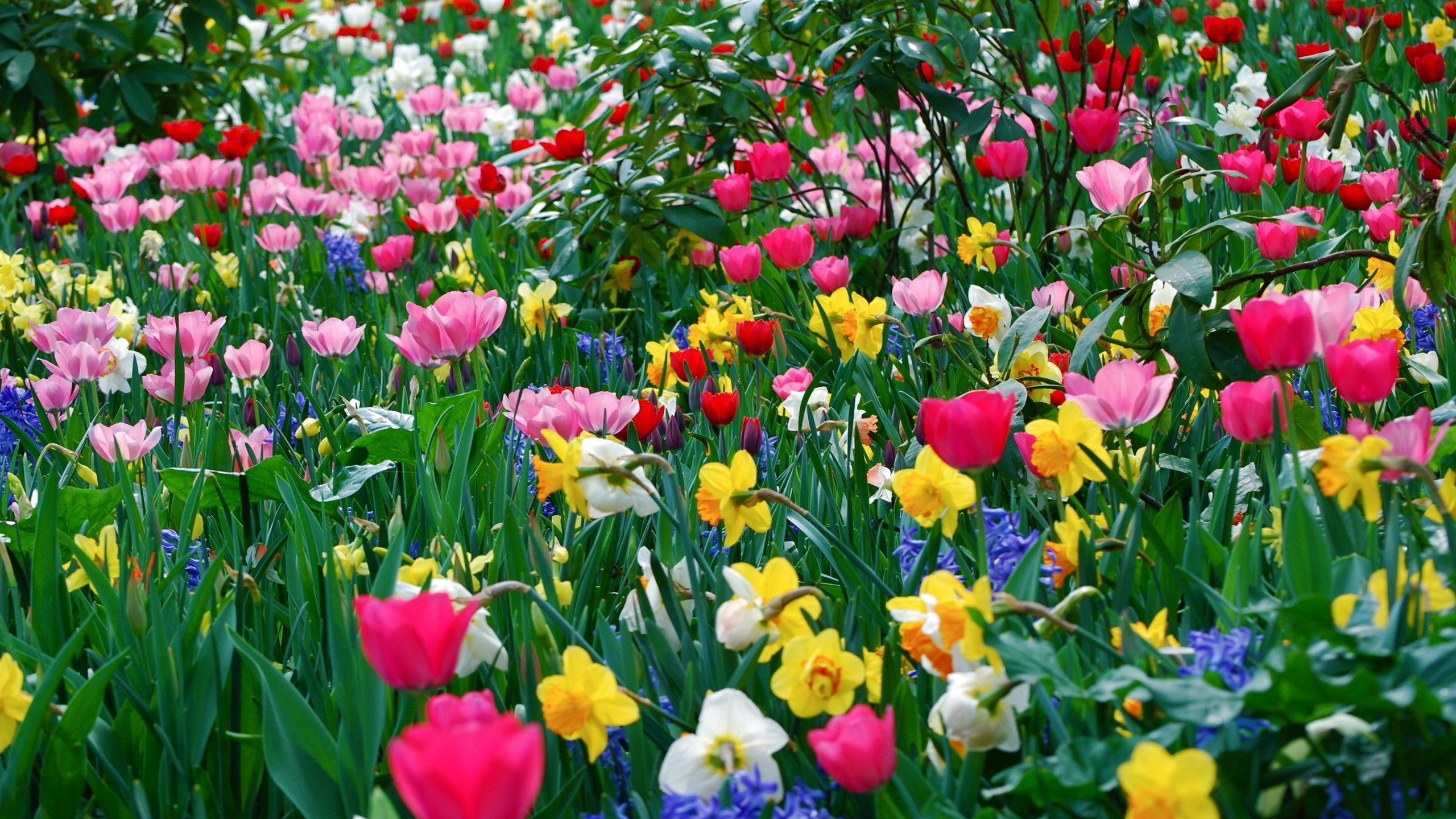 HD Wide_hd wallpapers for pc full screen flower Spring