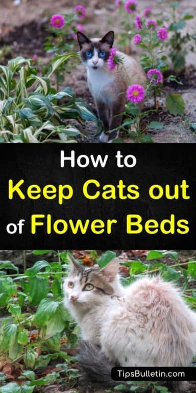 How To Keep Cats Out Of Flower Beds Tipsbulletin