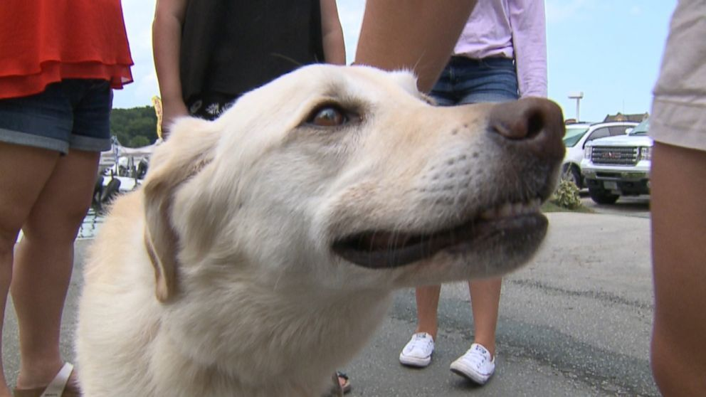 Dog Missing for Month Returns Home After Found Bobbing in Lake