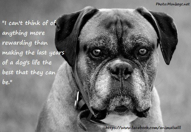 QUOTES & POEMS - PETS