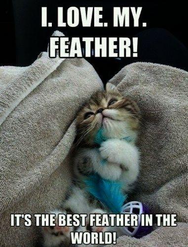 Cute Cats Fat Cute Kittens Emoji