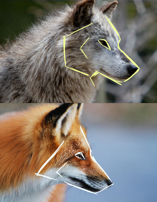 Foxwolf Ref By Norisus References Pinterest Wolf Foxes And