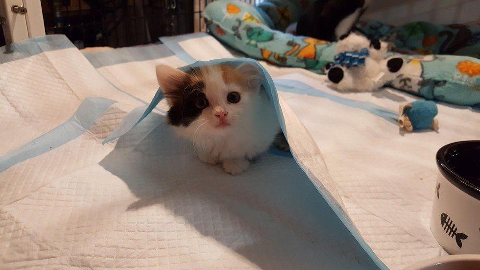 Depuis son sauvetage, cette chatte paralysée prend soin de chats partageant son handicap - Wamiz