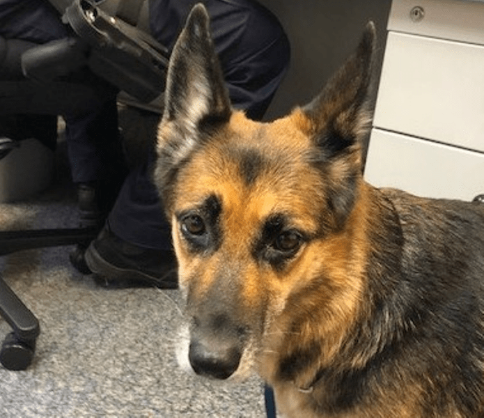 Man And Dog Rescued After Treading Water For Over 11 Hours In 2020 Man And Dog Rescue Dogs Dog Swimming