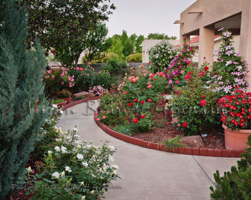 Small Garden With Roses Rose Of Sharon And Clematis Rose Garden Design Garden Landscape Design Roses Garden Care