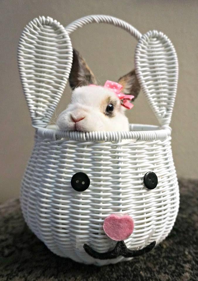 Tessa in a basket!
