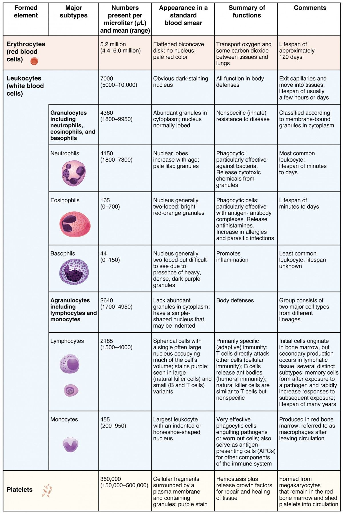 This Table Shows The Different Types Of Cells Present In