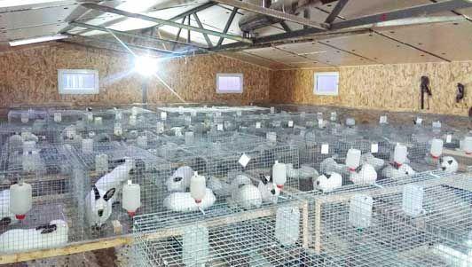 Бизнес на выращивание кроликов 53