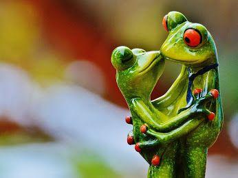 Science Fiction 2016 La Fin Du Monde Google Frog Pictures Cute Frogs Frog