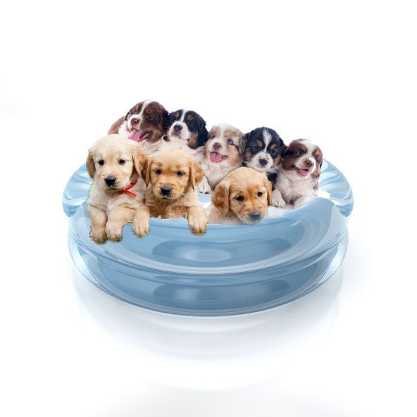 what do you actually deserve for christmas you got kiddie pool full of puppies you deserve a kiddie pool filled with puppies a giant pile of puppies