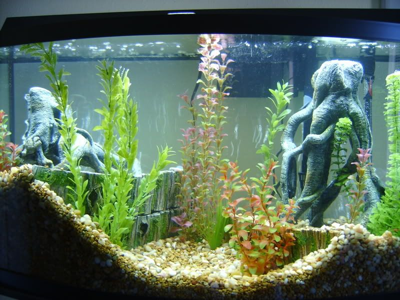 A freshwater tank that won a contest of some sort i for How to setup a freshwater fish tank