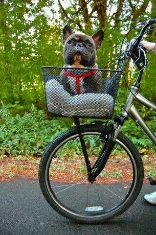 French Bulldog Frenchielove By Rita Haynes Dog Bike Carrier