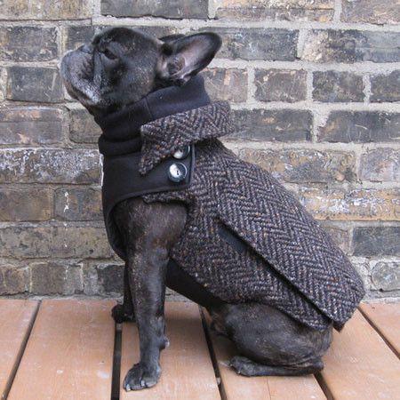 City Coat Boys Babies Beasts Dog Winter Coat Winter Dog