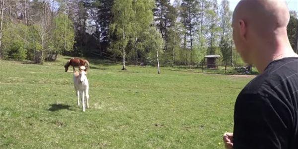 現代の馬使い 馬の鳴き声をマネて子馬を呼び寄せる鳴きマネのプロ - http://naniomo.com/archives/6796