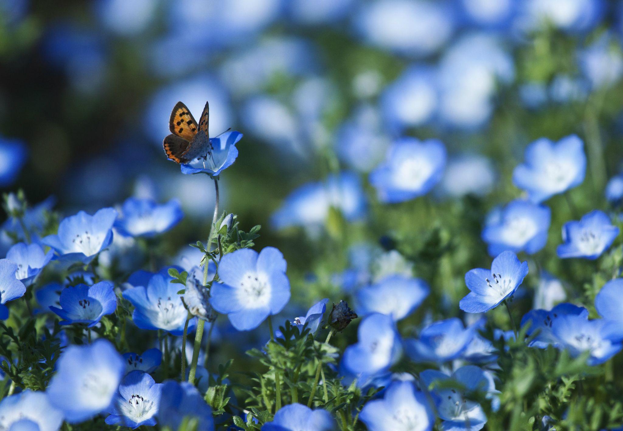 butter spring blue wallpaper - photo #1