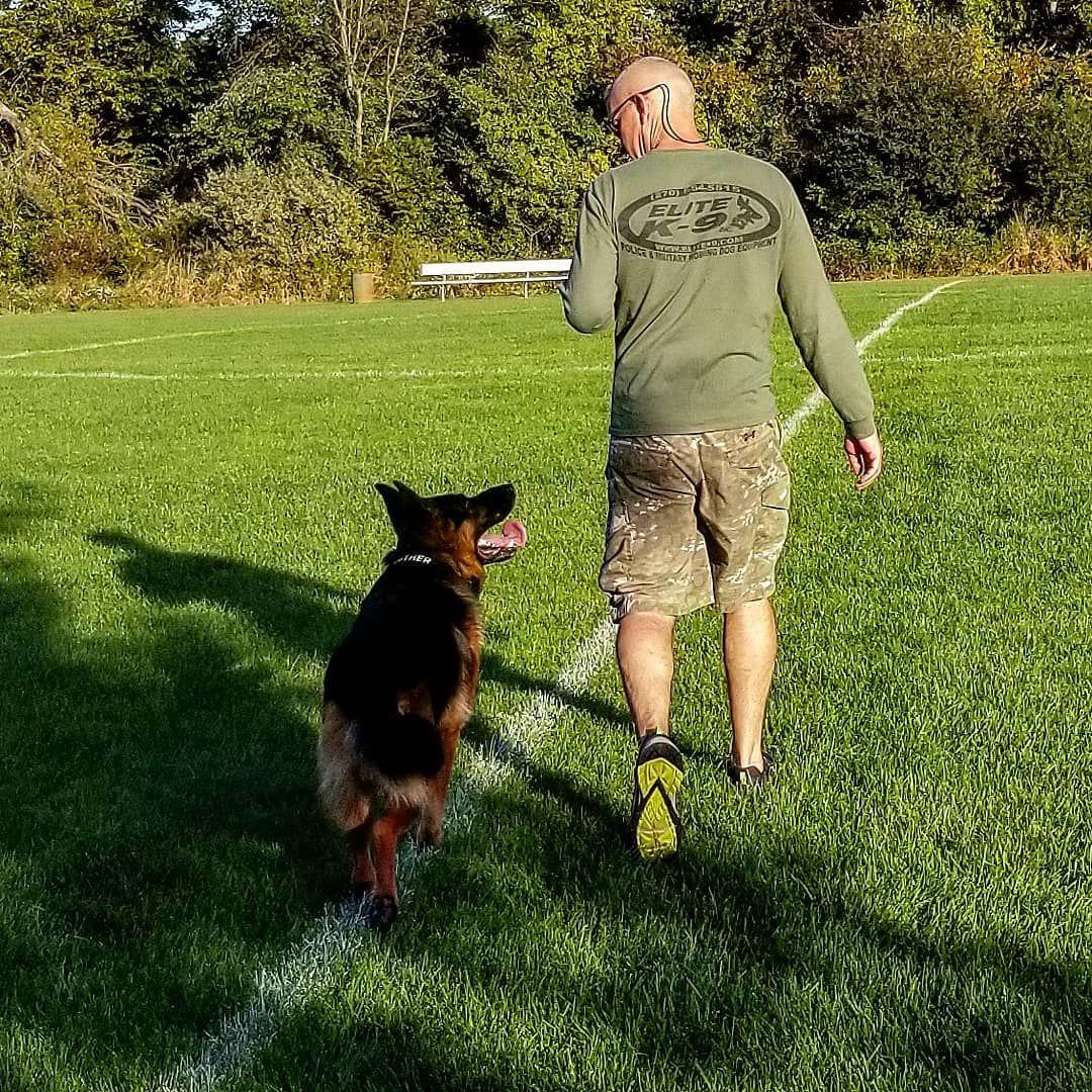 Nipping Puppy No Words Just Understood Gsd Germanshepherds Dog