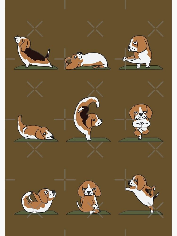 Beagle Yoga Poster By Huebucket W 2020