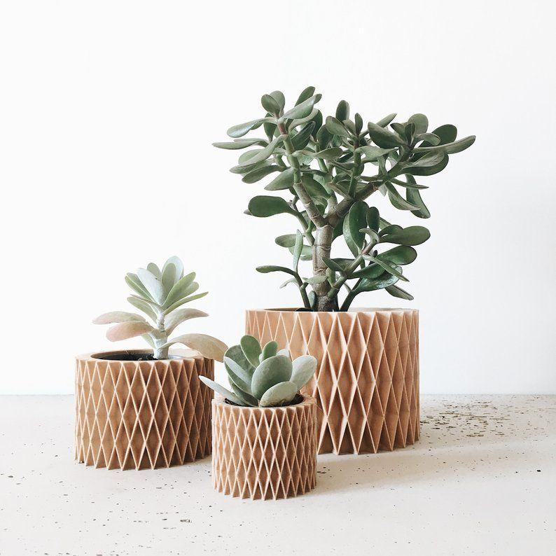 Cache Pot Bois Cactus Succulente Design Geometrique Et