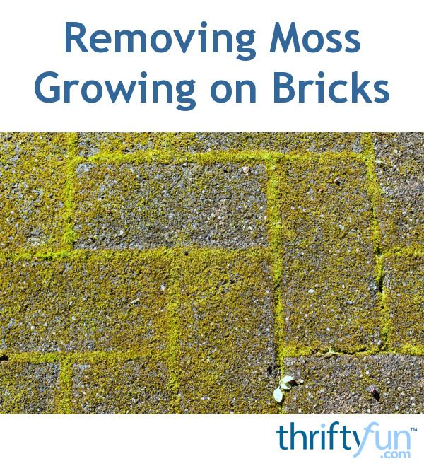 Removing Moss Growing On Bricks In 2019 Home Improvement
