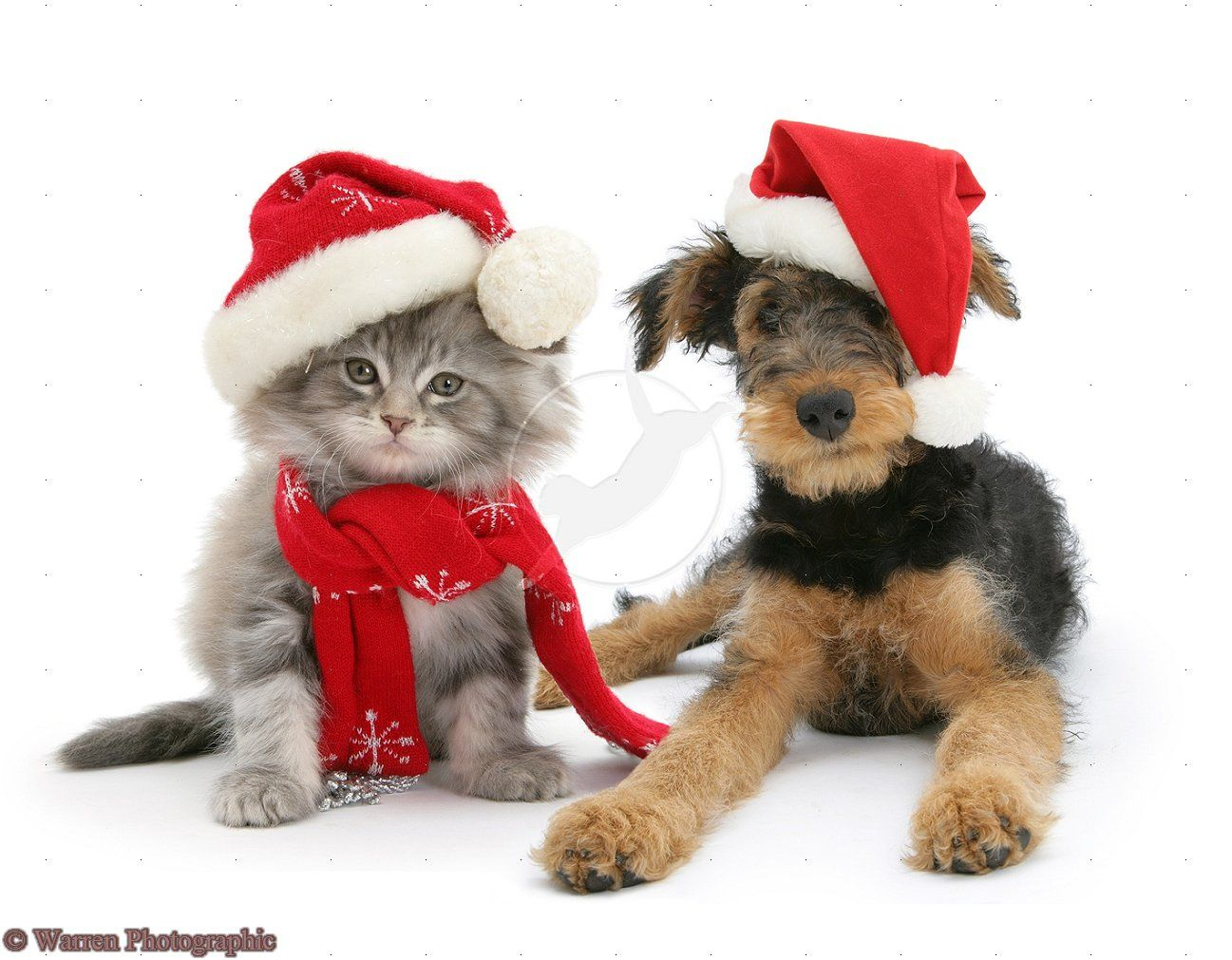 christmas puppy kitten cute christmas and new year pinterest