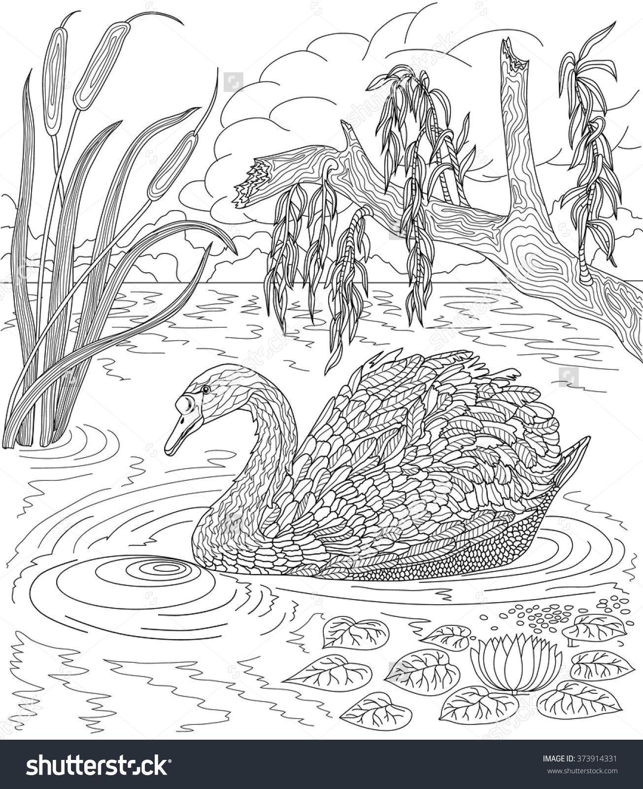 Hand Drawn Bird Swan Swimming In A Lake With Reeds And Water