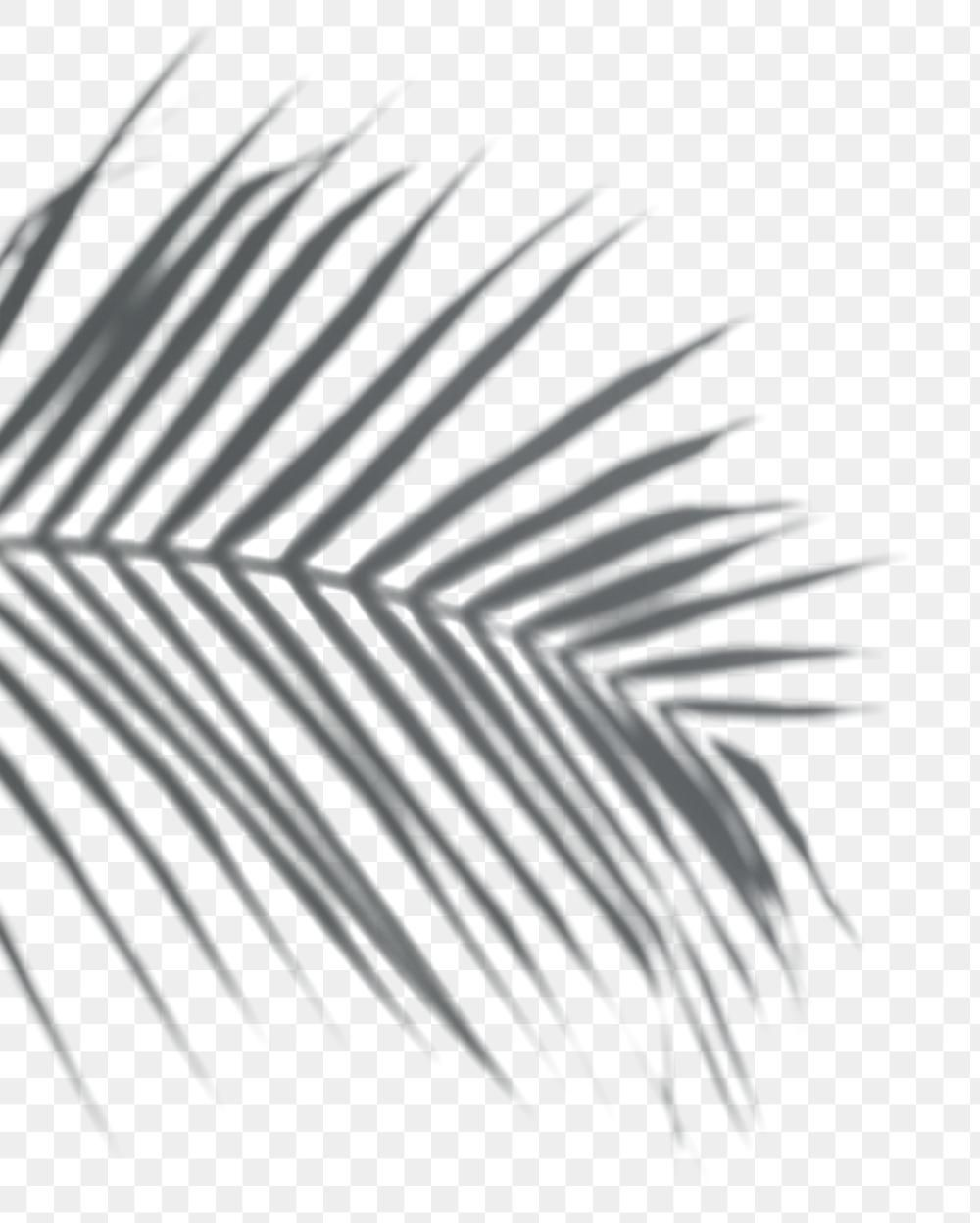 Shadow Of Palm Leaves Png On A Transparent Background Premium Image By Rawpixel Com Shadow Shadow Plants Palm Leaves