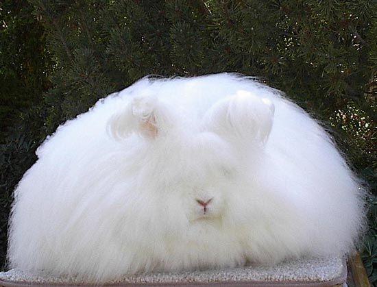 Znalezione obrazy dla zapytania fluffy bunny